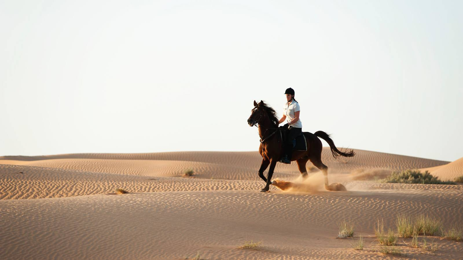 Horse Riding at Al Dhabi Stable