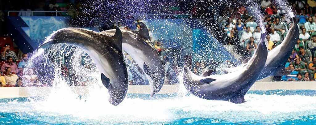 Dubai Creek Park Dolphin Show
