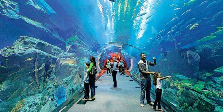 Dubai Aquarium Images and Pictures the largest Aquarium in the world