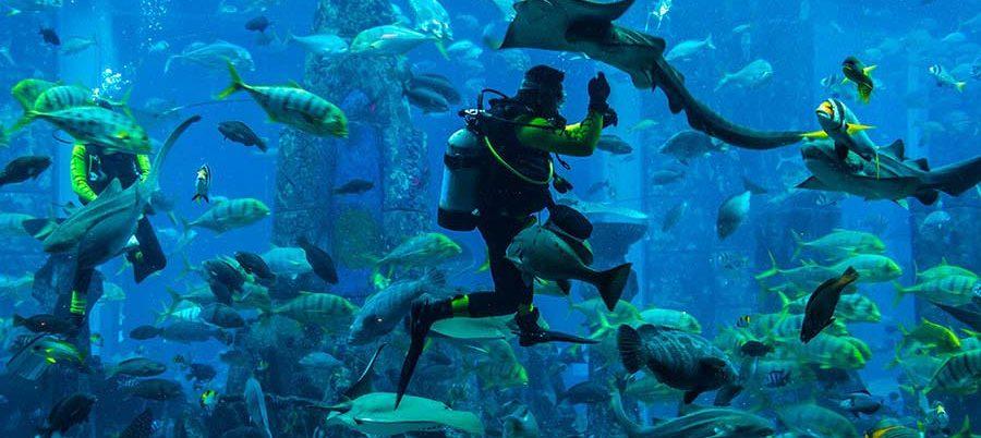scuba-diving-in-dubai