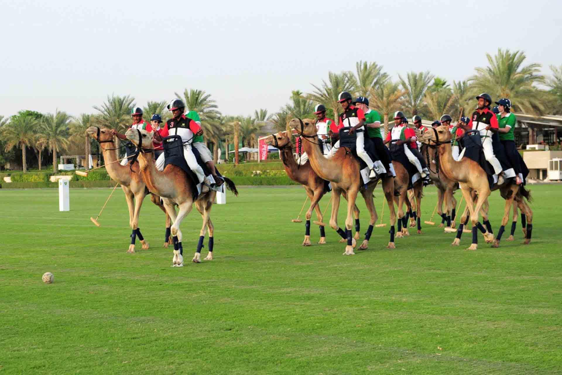 Play Camel Polo in Dubai