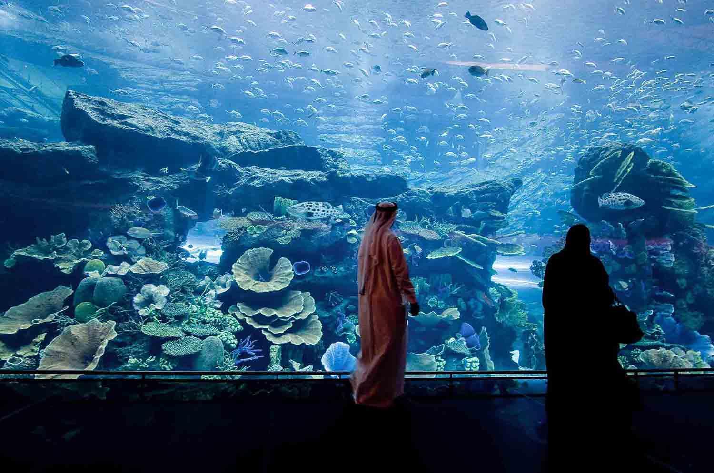 Underwater Zoo in Dubai Mall