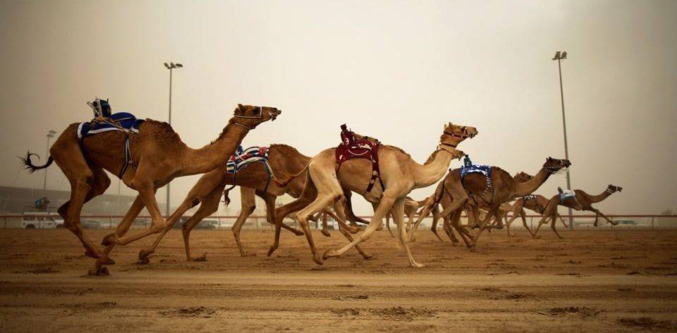 Camel Racing In Dubai a must visit to Dubai
