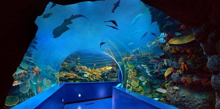 Sharjah Aquarium is the most visited places in Sharjah By childrenSharjah Aquarium is the most visited places in Sharjah By children