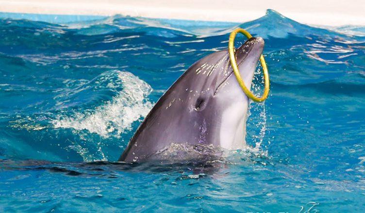 dubai creek dolphinarium