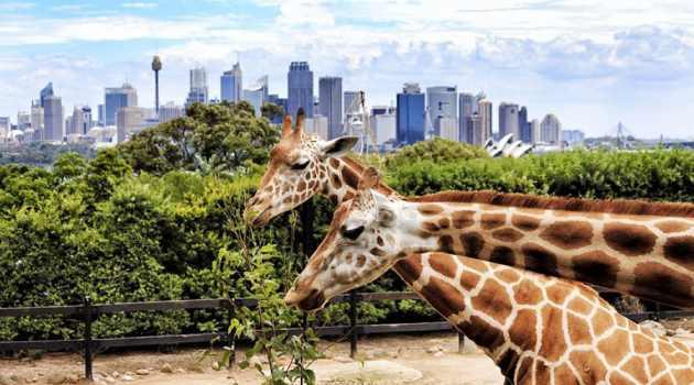 dubai-safari-park-zoo