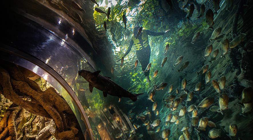 Green-planet-Snorkeling-Piranhas